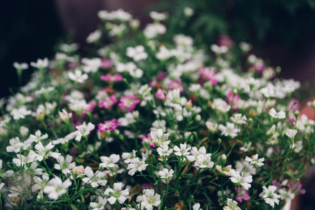 FrauBpunkt Blumen