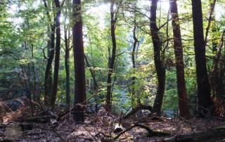 FrauBpunkt Pilze Knödel Wald Natur-96